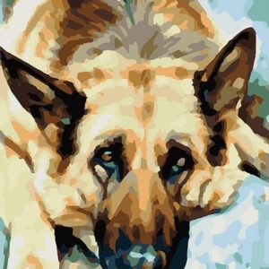 Painting by Numbers kit German Shepherd 50x40cm T50400263