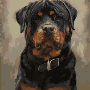 Painting by Numbers kit Rottweiler 50x40cm T50400254